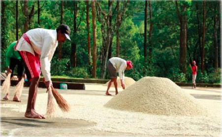 Seethargundu Estate /OCC Kerala Organic